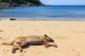Dog sleeping on beach — Stock Photo