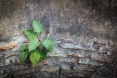 Young tree grow in cement wall — Stock Photo