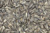 Black Sunflower seeds — Stock Photo