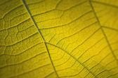 Texture of tree leaf — Stock Photo