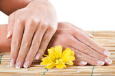 Close up of female hands holding flower — Stock Photo