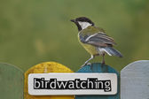 Bird perched on a fence decorated with the word birdwatching — Foto de Stock