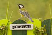 Bird perched on a fence decorated with the word spring on spanish — Stock Photo