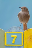 Bird perched on a fence decorated with number seven — Stock Photo