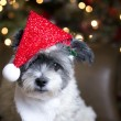 White puppy with Christmas lights — Stock Photo #73338291
