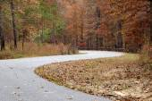 Curved road with trees and leaves — Stock Photo