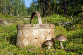 Mushrooms and a basket on a forest path — Stock Photo