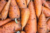 Background of fresh carrots  — Стоковое фото