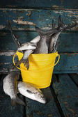 Raw fish in a bucket — Stock Photo