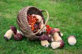 Harvest of mushrooms in basket — Stock Photo