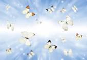 3d kelebekler — Stok fotoğraf