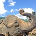 Elephants At Pinnawala Elephant Orphanage, Sri Lanka — Stock Photo #65534073