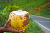 King Coconut — Stock Photo