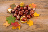 Autumn Background whith chestnut and maple leaf — Stock Photo