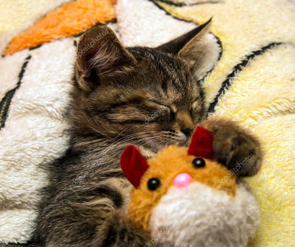 小可爱小猫睡拥抱毛绒玩具– 图库图片