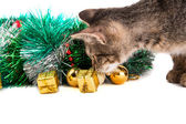 Grey kitten looking at Christmas decorations on white background — Stock Photo