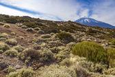 El teide mountain — Stockfoto