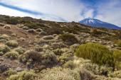 El teide mountain — ストック写真