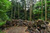 Вуд журналы на земле леса — Стоковое фото
