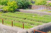 Farm Garden — Stock Photo