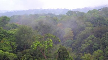 Beautiful views of the tropical forests of Africa in the fog. Jungles, mountains, fog — Stock Video