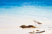Sea bird tropics — Stockfoto