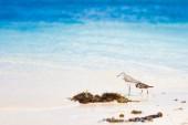 Sea bird tropics — ストック写真