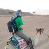 Tour camel Egypt — Stock Photo