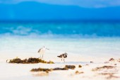 Sea bird tropen — Stockfoto