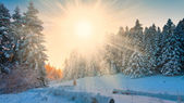 Winter  sunset  Christmas  landscape — Photo
