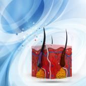 Анатомия кожи человека поперечное сечение — Стоковое фото