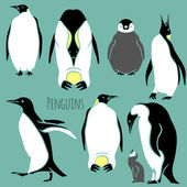 Black and white penguin set — Stock Vector
