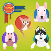 Set of different dog breeds. — Stock Vector