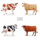 Different cows — Stock Vector