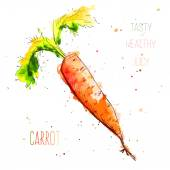 Watercolor orange carrot with splashes in free style. Fresh and juicy colors. Hand drawn isolated on white background. — Stock Vector