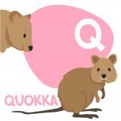 Funny cartoon animals vector alphabet letter set for kids. Q is Quokka   — Stock Vector