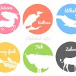 Color animals silhouettes labels in colorful circles. Wild animal logotype or alphabet isolated on white background — Stock Vector #76480279