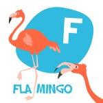 Funny cartoon animals vector alphabet letter set for kids. F is Flamingo — Stock Vector #76480531