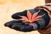 Autumn leaves on black glove  — Stock Photo