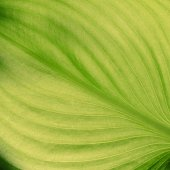 Texture of green leaves — Stock Photo