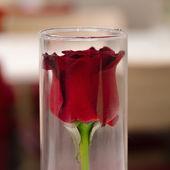 Red rose in vase for valentine's day — Stock Photo