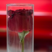 Red rose in vase for valentine's day — Стоковое фото