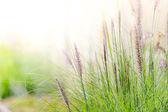 Beautiful closeup meadows horticultural show — Stock Photo