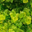 Beautiful artificial green leave as background texture — Stock Photo #75115451
