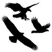 Set of black silhouette three eagles — Stock Vector