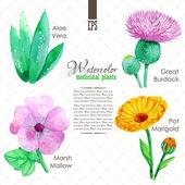 Set of watercolor madicinal plants — Stock Vector