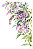 ακουαρέλα λουλούδι — Φωτογραφία Αρχείου