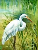 Watercolor   heron in water — Stock Photo