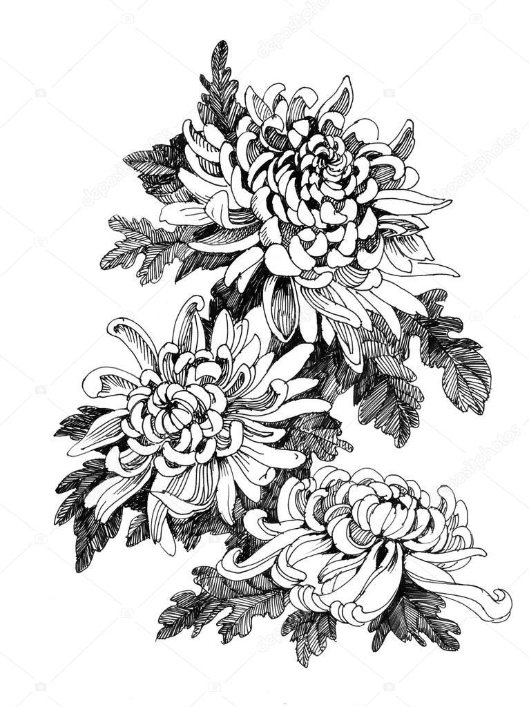 chrysanthemum astro bronze  a good intermediate orangey bronze that flowers in mid october
