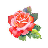 Watercolor red rose — Stock Photo